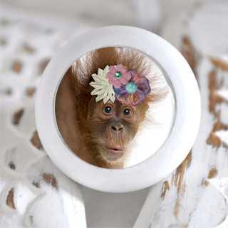 Möbelknauf mit Tierbaby-Motiv Affe