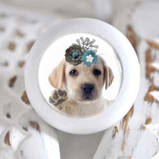 Möbelknopf mit Tierbaby-Motiv Hund