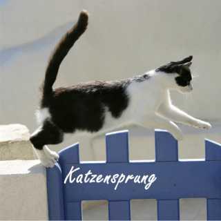 Katzen-Bildband Katzensprung